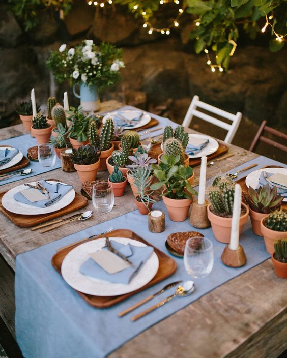Cactus and plants on a patio table